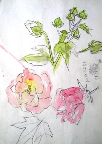 Himawari002