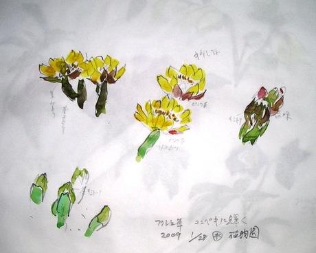 Nakakuni367